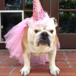 halloween costumes for your dogs